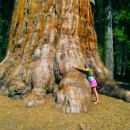 Sequoia National Park: Finding Resilience in the Forest