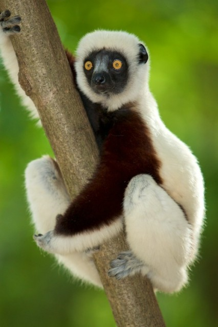 lemurrrr